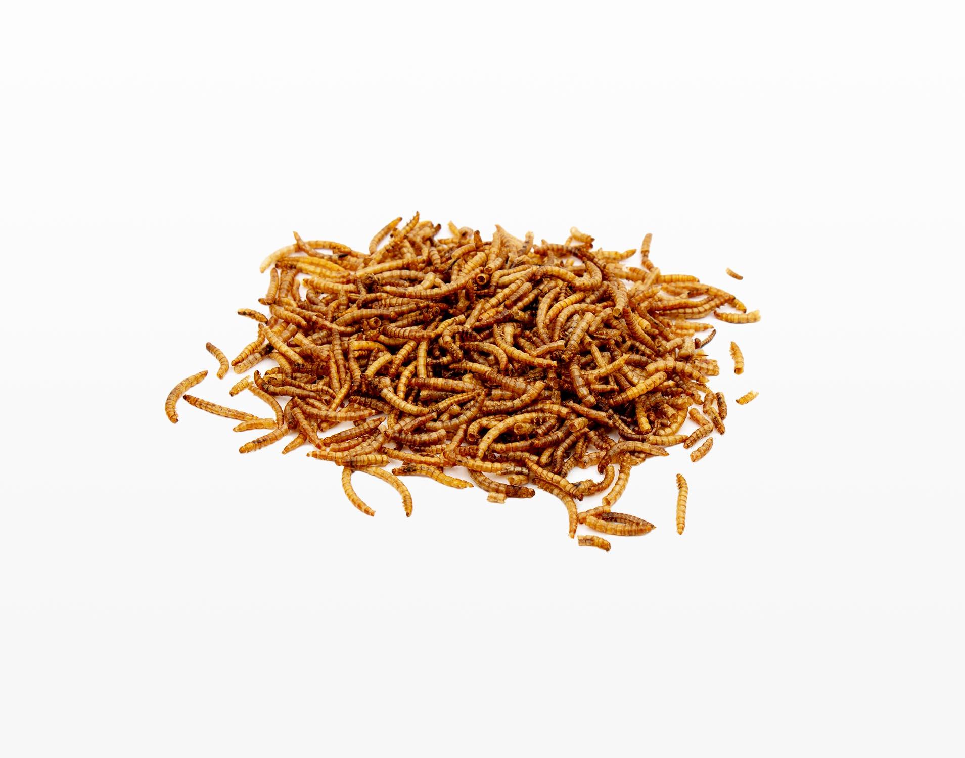 Strooivoer - Gedroogde Meelwormen